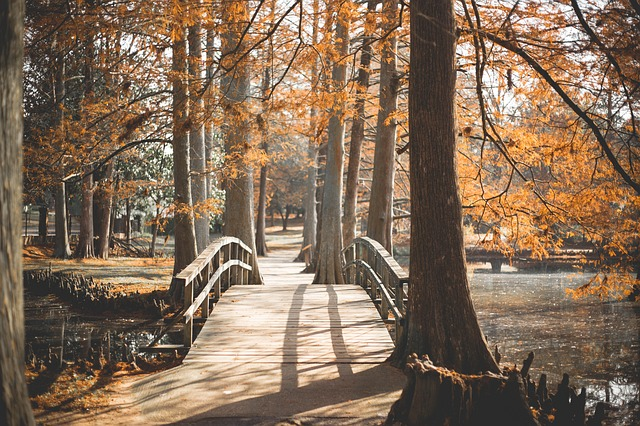Wooden bridge on walking path in the fall, credit: Pixabay: 3013297